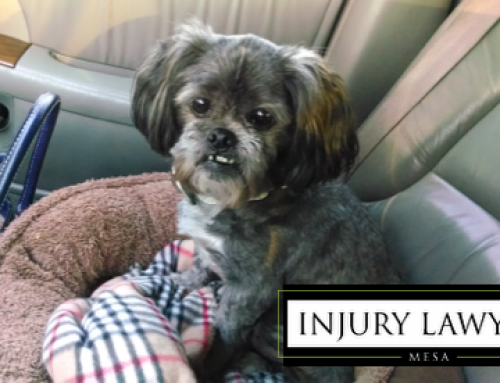 Pets Injured in Car Accidents
