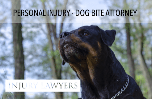 Arizona dog bite attorney